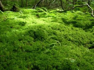 Forest of Moss inside a Forest